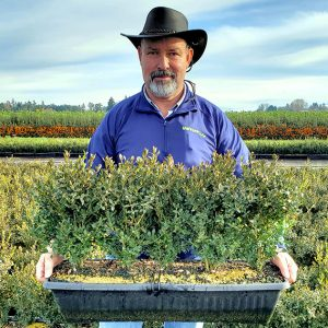buxus-boxwood-field-nursery-worker-holding-winter