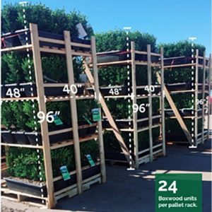 buxus-green-mountain-boxwood-shipping-rack-hedge-instanthedge