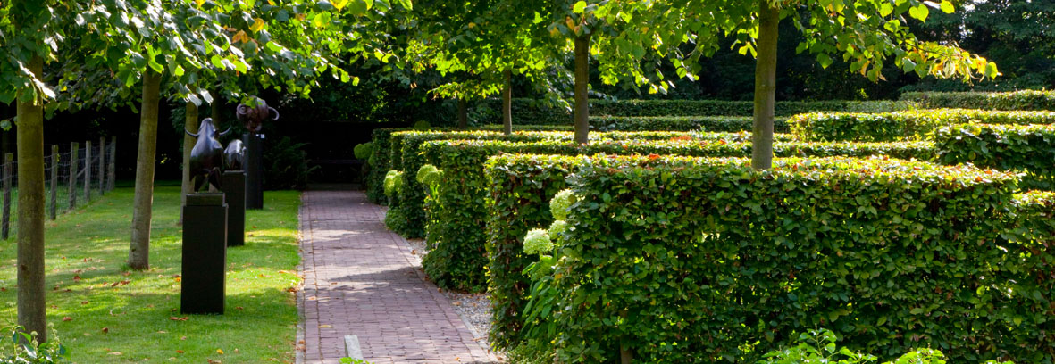 Contemporary gardens: Landscape your garden with hedges to create Contemporary gardens