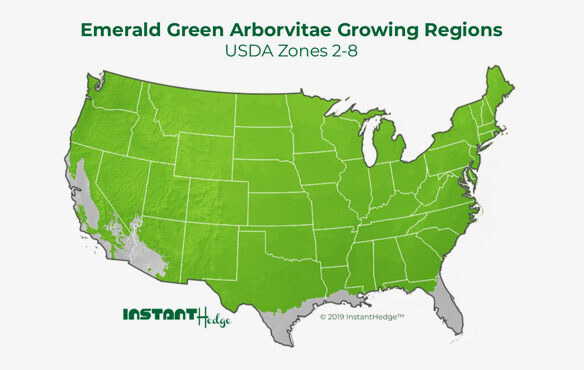 Emerald green arborvitae comes in best privacy hedges which ideal for zone 2-8.