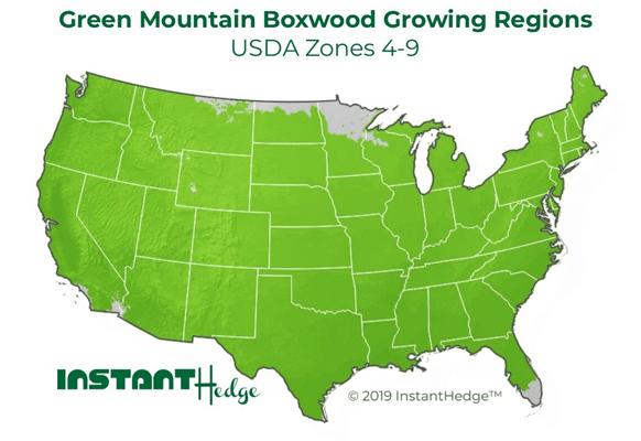 Green Mountain Boxwood Hedge Growing Region