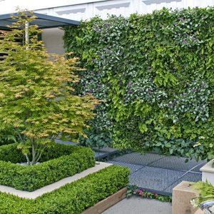 shutterstock_674739961-Buxus-courtyard-modern-suburban-urban-patio