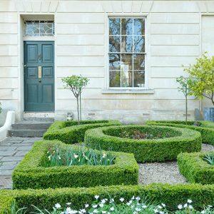 shutterstock_797387416-buxus-boxwood-knot-garden-low-border-cottage-estate-spring-daffodil-flower