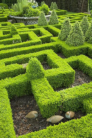 00794705-Buxus-modern-formal-knot-garden-InstantHedge