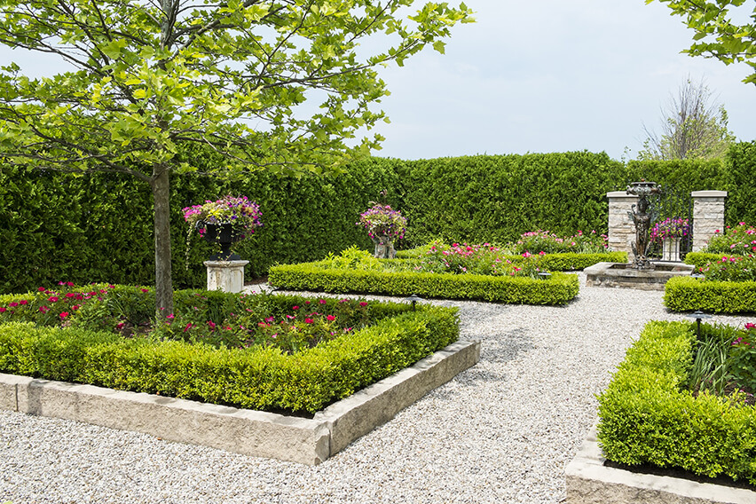 143658982-Buxus-thuja-occidentalis-park-formal-estate