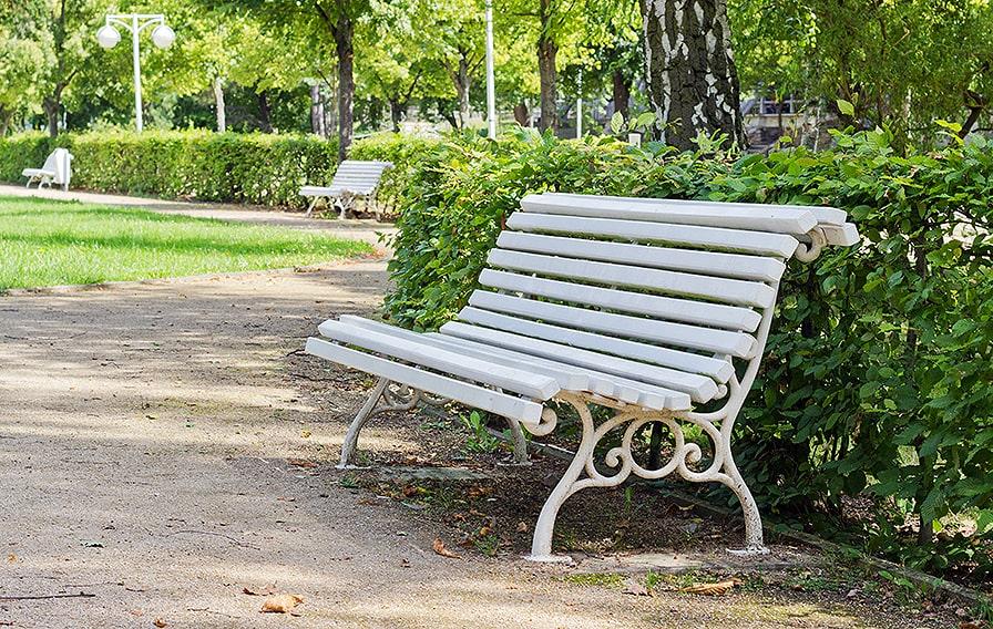 212160064-fagus-beech-hedge-urban-city-park-bench-border-privacy-green-screen