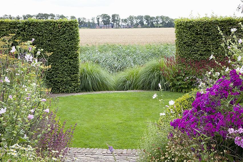 37283-Fagus-Beech-hedge-country-estate