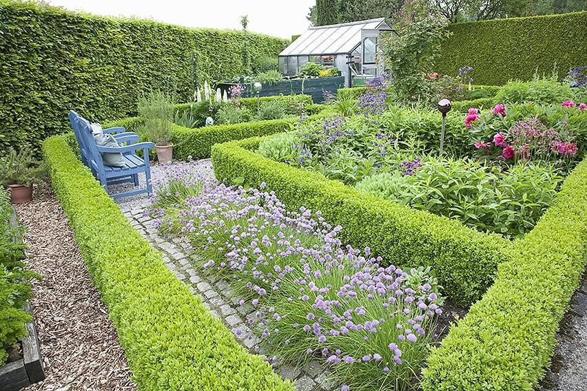 38516-Fagus-Beech-boxwood-Buxus-hedge-country-knot-garden