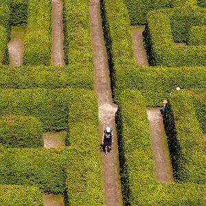 458586433-fagus-beech-hedge-tall-maze-garden-botanical-estate-park-museum-art