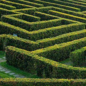 495074725-prunus-laurel-hedge-tall-privacy-maze-garden-botanical-estate-park-museum-art