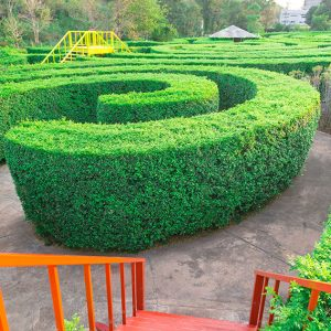 600621098-tall-privacy-hedge-maze-garden-formal-curve-modern-contemporary-design-landscape