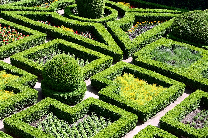 63817801-buxus-boxwood-botanical-display-knot-garden-estate