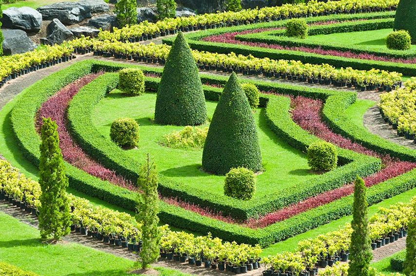 89444857-buxus-boxwood-knot-garden-botanical-display-estate