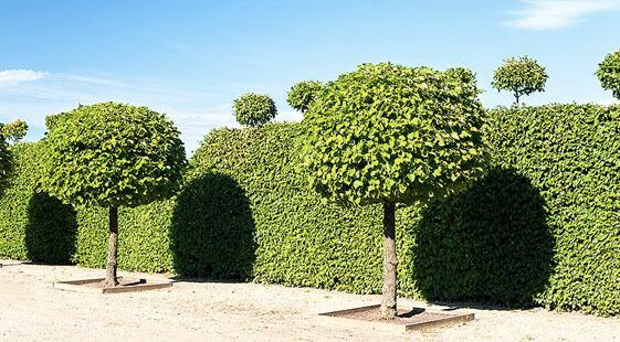 PLANT SPOTLIGHTS