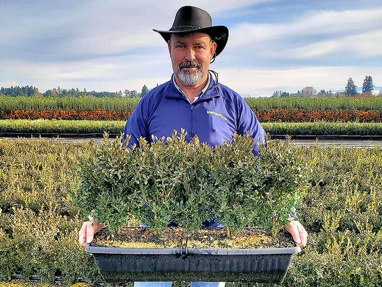 buxus-boxwood-field-nursery-worker-holding-winter-InstantHedge