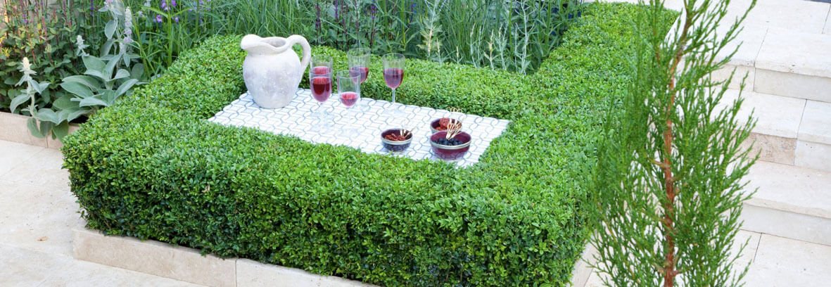 plant combination ideas for container gardens