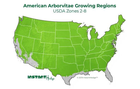 American Arborvitae Growing Regions