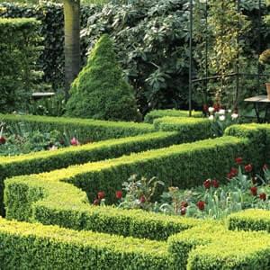 Small Knot Garden Designs