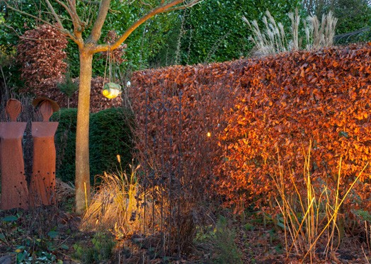 Deciduous Hedge Year Round Color
