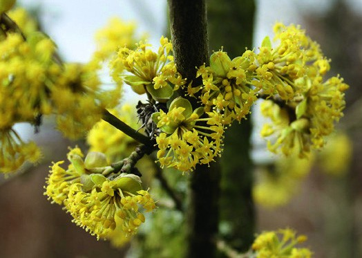 Experience Flowering Hedge