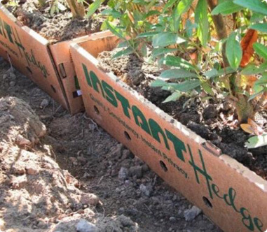 InstantHedge unit planting biodegradable cardboard box no waste