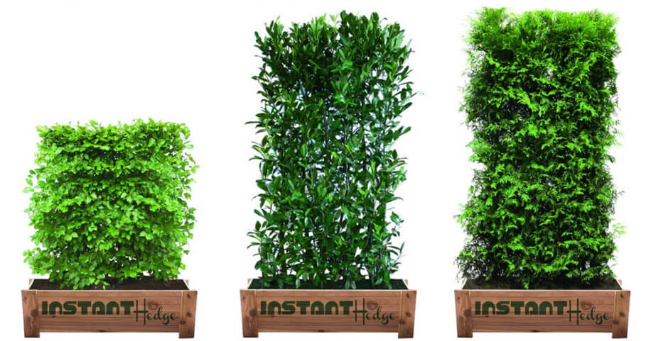 InstantHedge prunus Schip laurel hedge cedar box durable strong