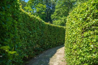 instanthedge vs conventional hedge