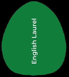types of laurel shrub