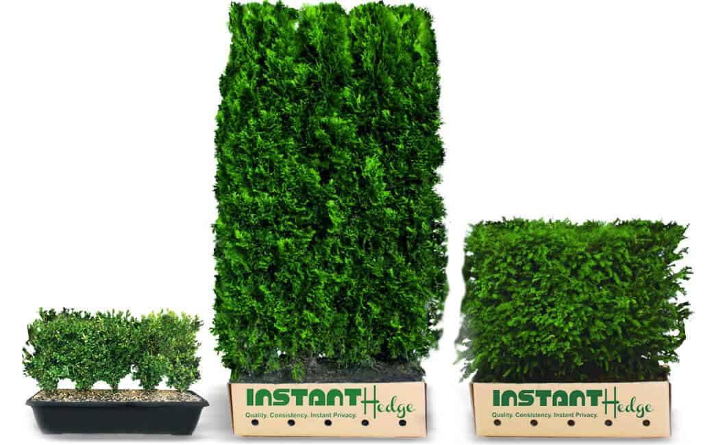 Best Garden Hedges
