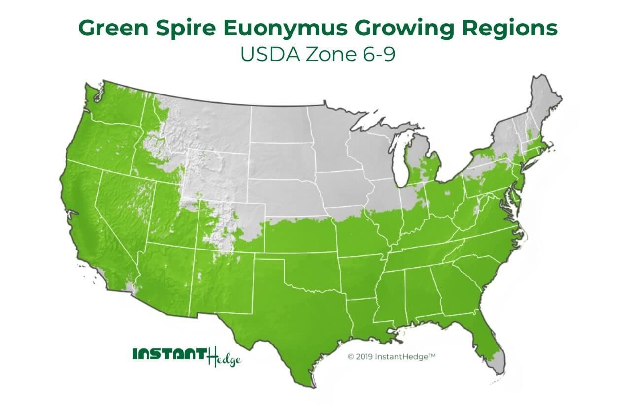 Euonymus Japonicus Green Spire growing region
