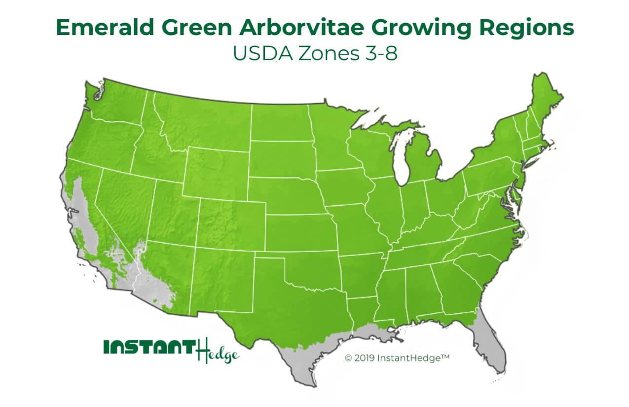 Emerald green arborvitae growing region