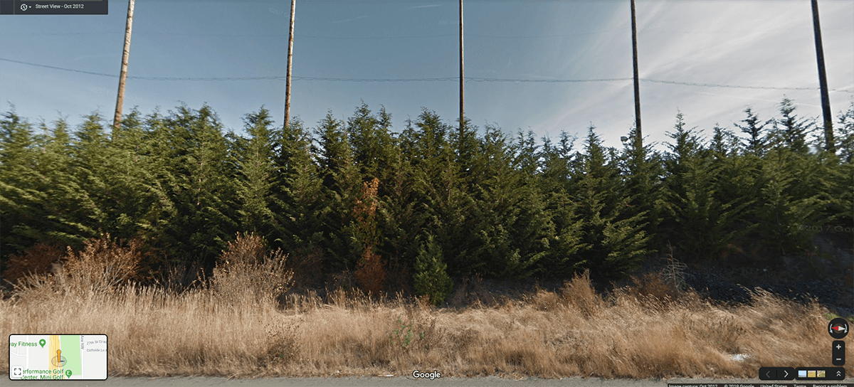 Leyland cypress growth rate. See how leyland cypress trees look like.