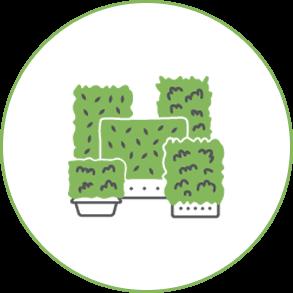 hedges in more than 25 varieties