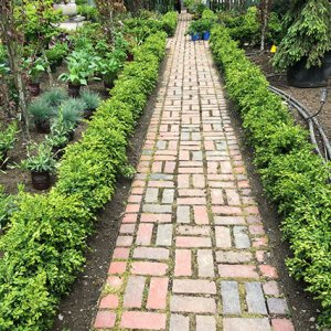 Lopez Landscaping Brookline MA Project during installation