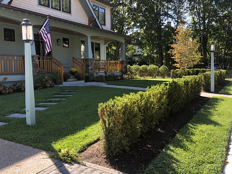 Taxus hicks yew hedge InstantHedge installation front yard