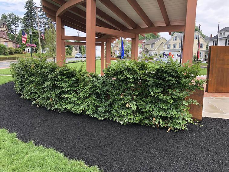 European beech hedge Cerbo's Project War Memorial (3)