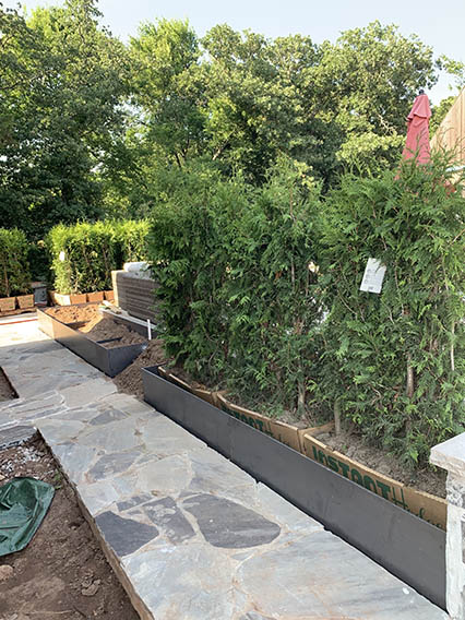 Gardner Studio Green Giant Hedge (2)